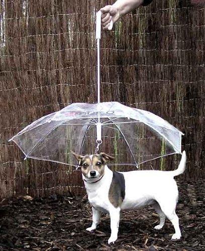 クリエイティブな傘10
