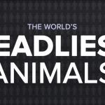 あなたの命を奪う可能性が高い「15」の動物
