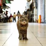 「猫」目線で広島の街を楽しめる広島キャットストリートビューがおもしろい