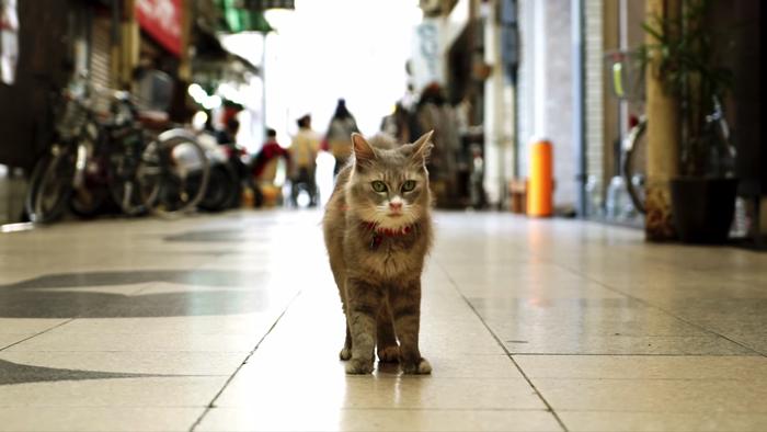 猫目線のストリートビュー
