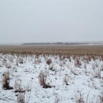 あなたはこの写真にいる550頭の羊を見つけることができますか?