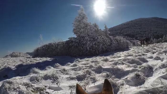 愛犬が撮影した雪山での結婚式1