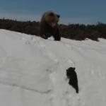 雪山の斜面をよじ登る子グマに親グマがまさかの行動、ネット上で物議
