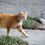 「世の中捨てたもんじゃない」消えた野良猫は今、張り紙に号泣