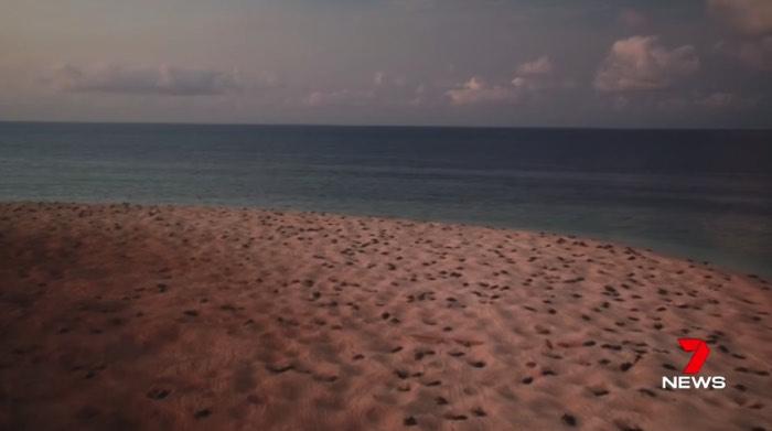 世界最大のアオウミガメの群れ