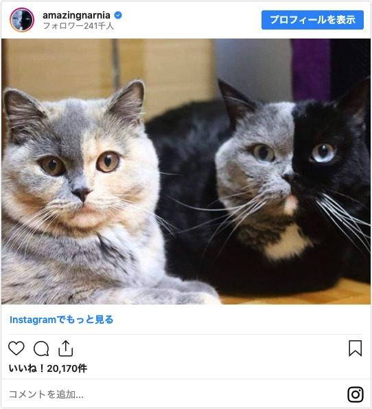 真ん中で色の分かれた猫