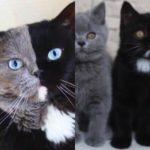 見事に真ん中で色の分かれた猫、2匹の子猫がそれぞれの色を受け継ぐ
