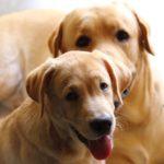 「犬の1年は人間の7年」は誤り!犬は2歳で人間の中年に、米大研究で判明