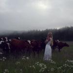 スウェーデン美女の歌声で牛が集まる、歌ったのはスカンジナビア伝統の音楽
