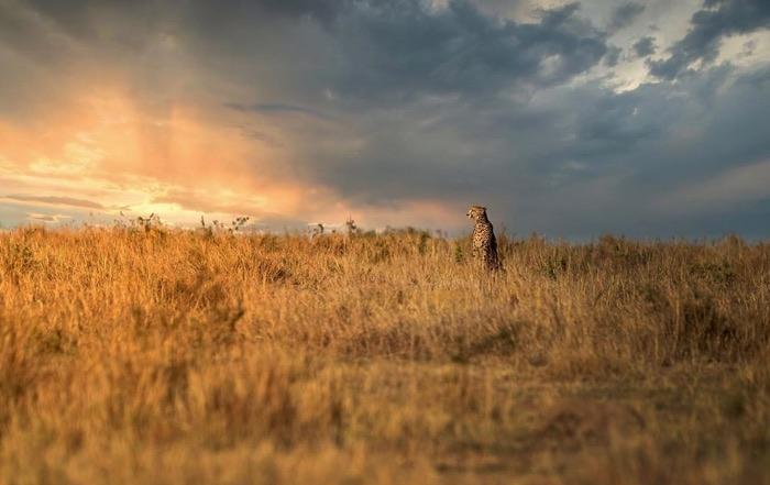 マサイマラ国立保護区