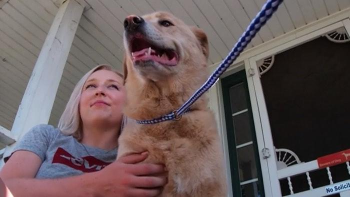 行方不明になった飼い犬、90キロ離れた前に住んでいた家で発見される